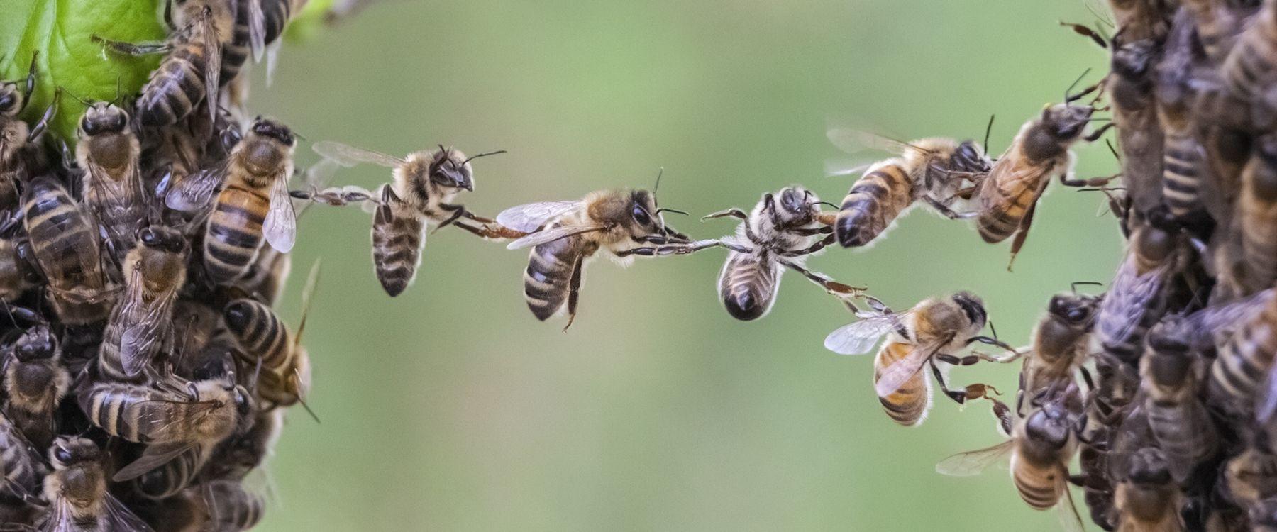てめえらサラリーマンは、働き蜂なの!