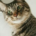 猫を使って姑息に稼ぐアカウント